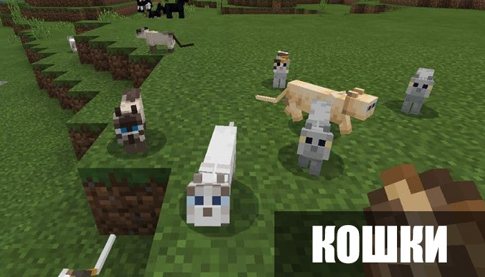 Кошки в Minecraft PE 1.8.0.11