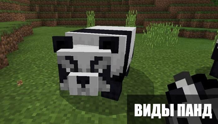 Виды панд в Minecraft PE 1.8.0.14